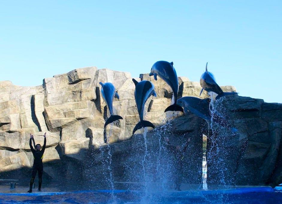 atrakcje batumi delfinarium
