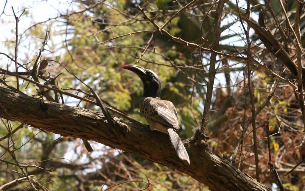 Gambia to raj dla ornitologów i wszystkich miłośników ptaków.