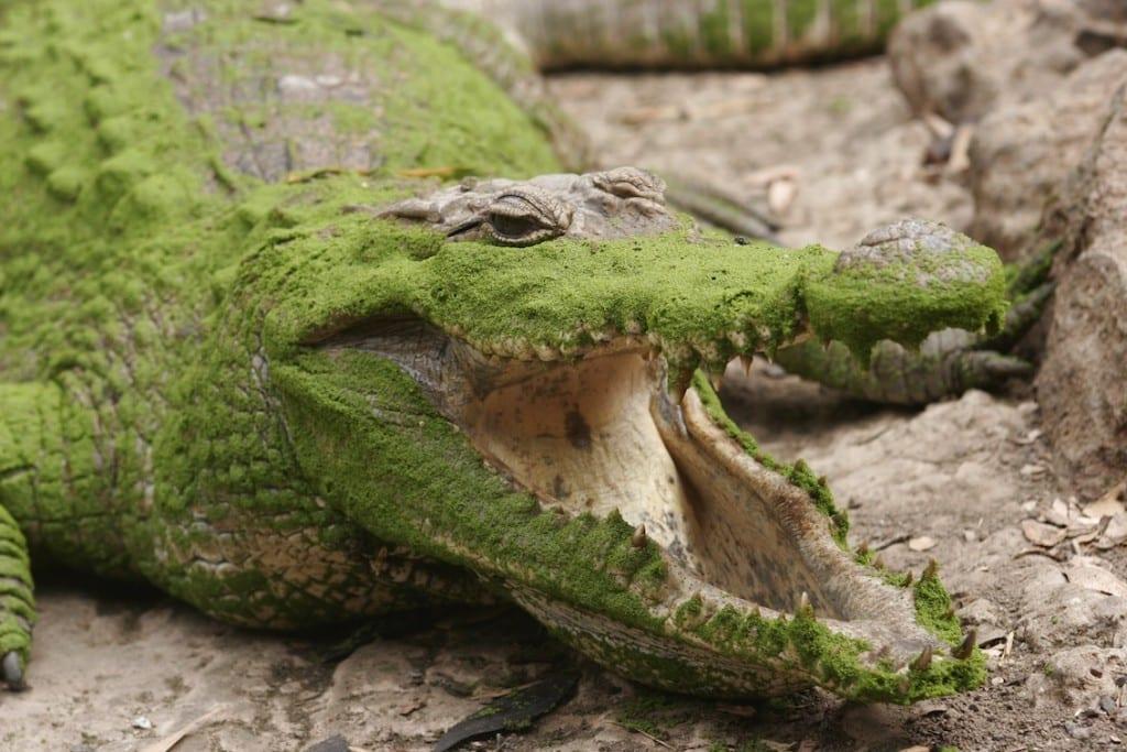 Gambia ma swoje tajemnice. Krokodyla w Kachikally są jedną z nich.