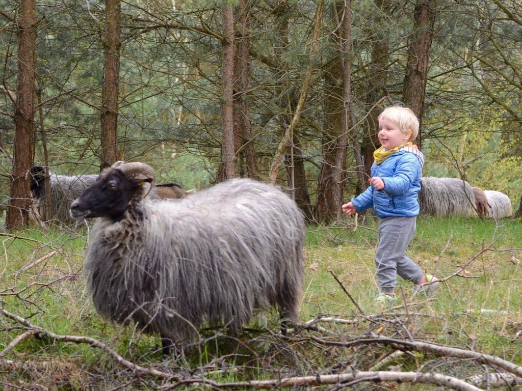 """Chruczek wpędził stado owiec do lasu biegając i pokrzykując """"baa baa black sheep!"""""""