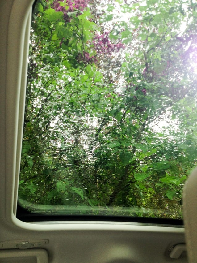 Widok przez okienko w dachu.