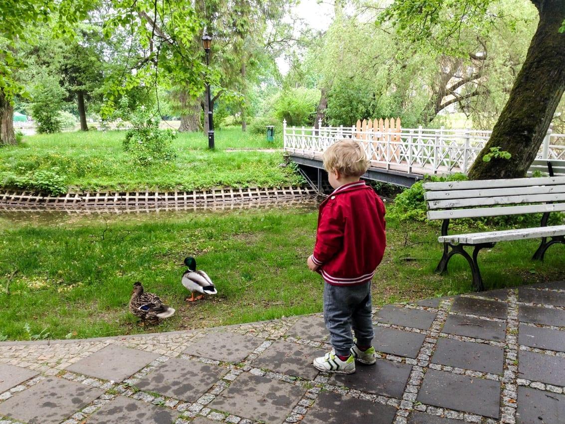 Chruczek obserwuje kaczki.