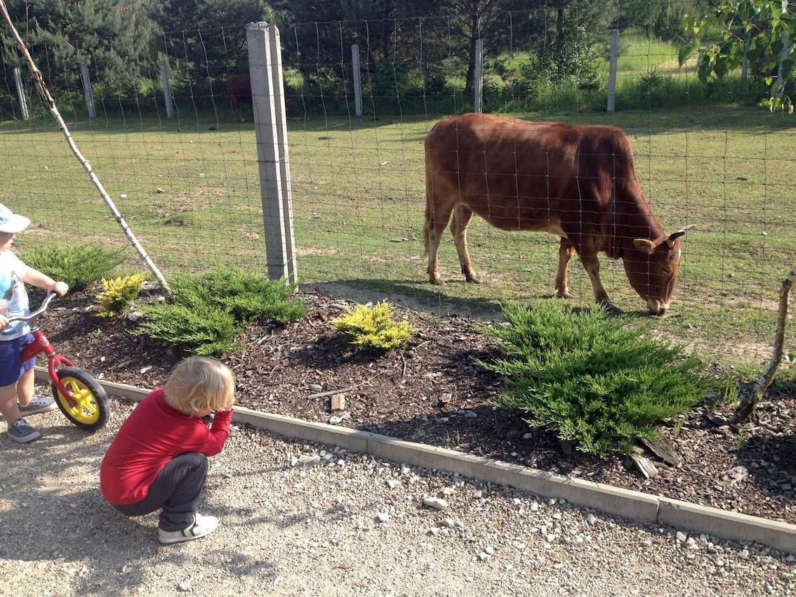 Chruczek podziwia zwierzęta w Leśnym Zaciszu.