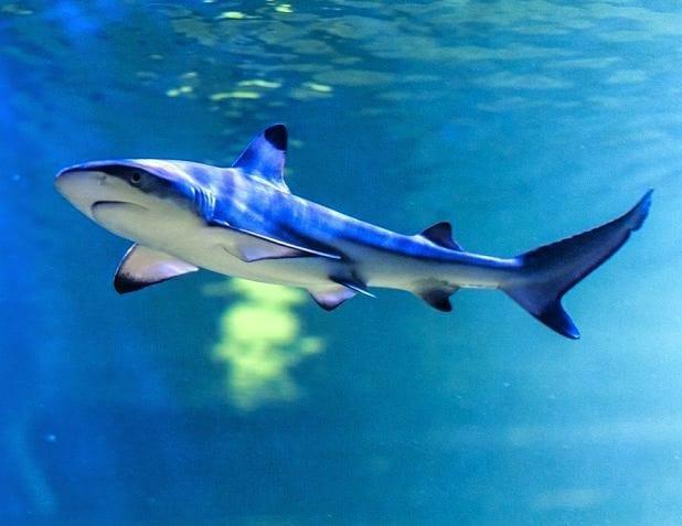 Najprawdziwszy rekin w Oceanice, w ośrodku Polanika w Zagnańsku.