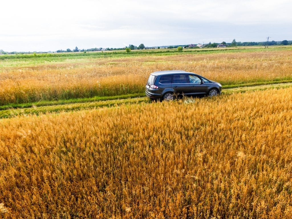Złote pola, przez które sunie nasz Ford Galaxy.