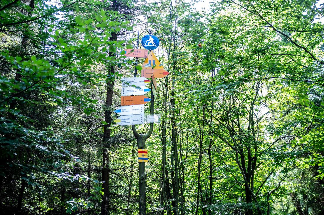 Gąszcz szlaków na granicy Bielska-Białej. Niebieski szlak prowadzi na Czupel