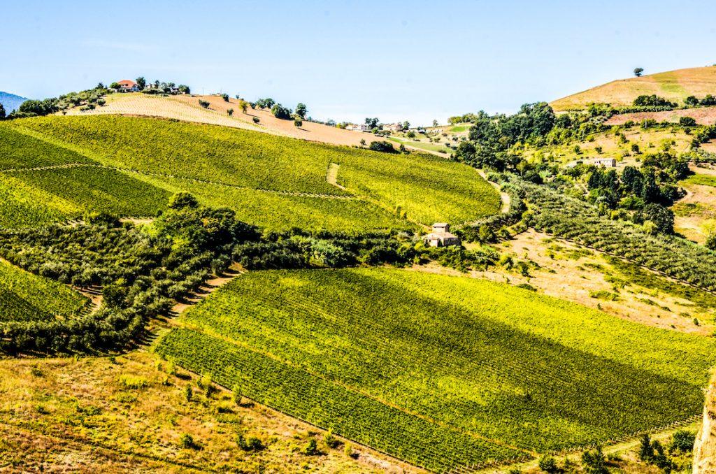 Łagodne zielone wzgórza w prowincji Marche