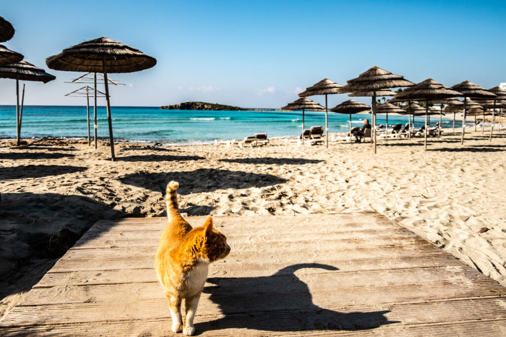 Piaszczysta plaża przy Nissi Beach Hotel